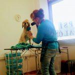 Strihanie psov Levice - Psí salón Nelly